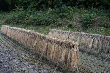 無名の米 僻地の米をおいしく炊く。有名な米が意外に大したことなかった件